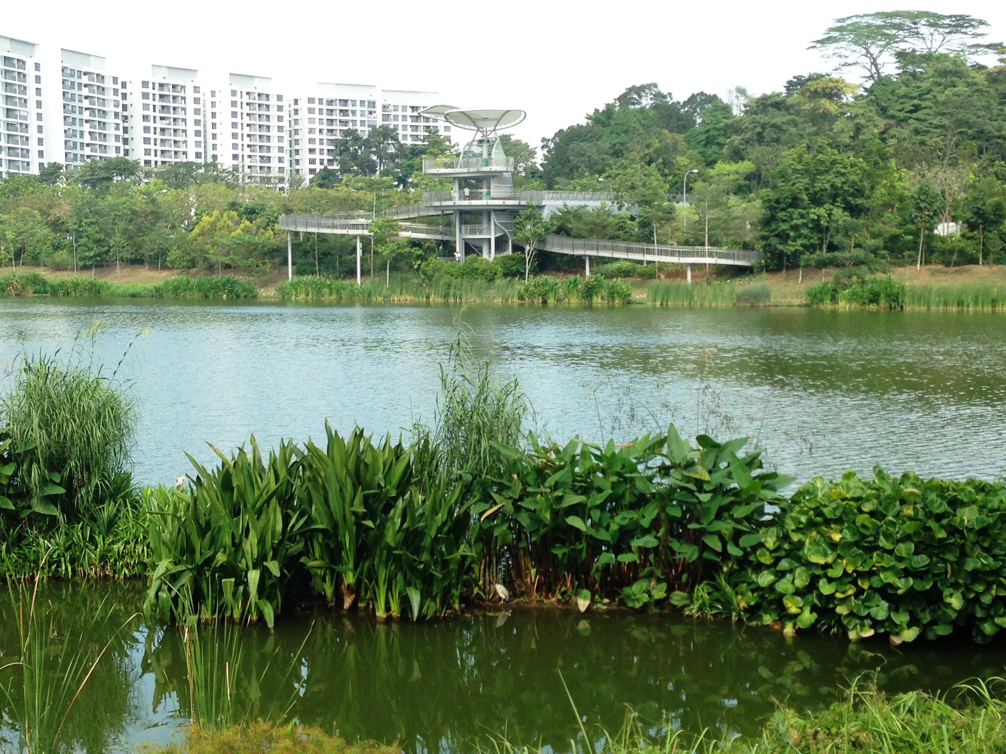 The beautiful and peaceful Yishun Neighbourhood Park